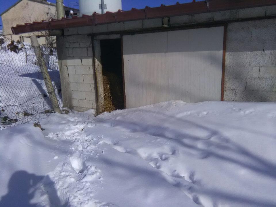 Il lavoro degli allevatori di montagna durante l'emergenza neve. Stalla di Mina Marcovecchio